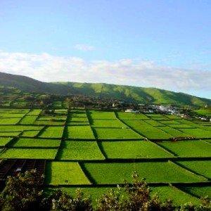 Açores e Madeira em promoção na agência de viagens Abreu