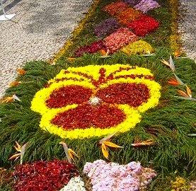 Ajudar a Madeira com a Festa da Flor
