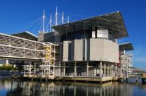 Programas educativos no Oceanário de Lisboa