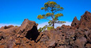 Melhor época para visitar Tenerife