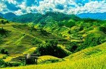 Quando visitar o Vietname