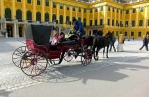 Visitas culturais em Viena