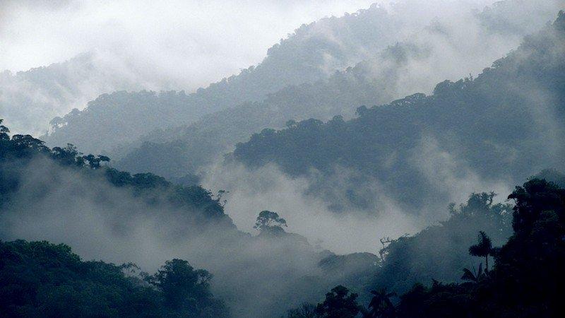 Floresta na Costa Rica