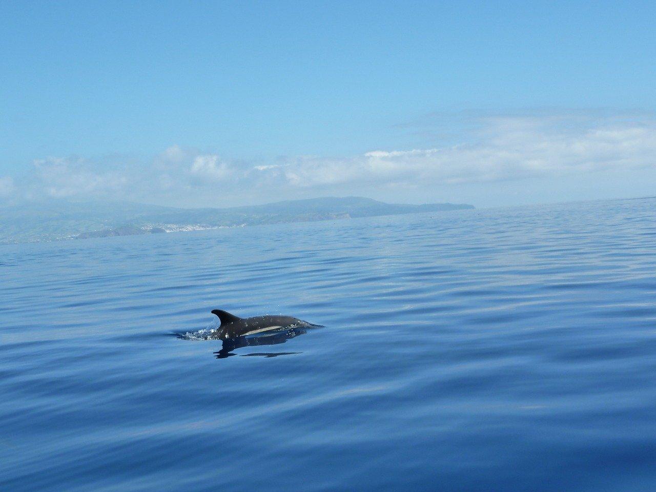 Passeios de barco na Madeira
